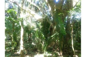 FIRE SALE,  2 lots for the price of one,  Best Land Deal in Pelada-$13m2  Under Contract