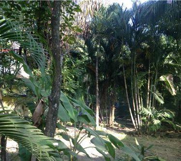 Playa Guiones, G section, Nosara Guanacaste, Costa Rica.