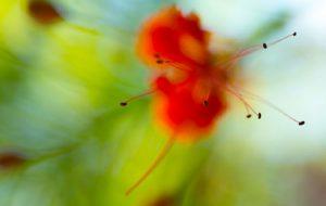 34a-flower
