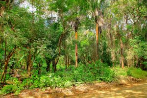 Large Parcel Close to the Beach in K Section-SOLD