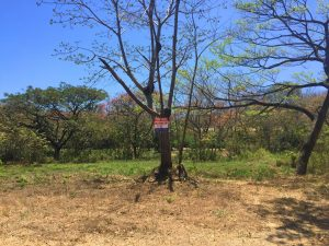 Affordable, Flat Lot in Quiet Area of Playa Pelada – SOLD