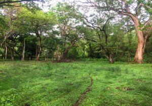 Corner Lot with Residential & Commercial Potential Near the Beach in Playa Pelada – SOLD