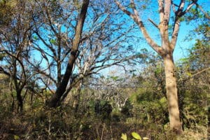 Spacious Jungle View Lot in Elevated Entrance to Pelada