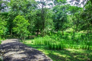 1.2 Acres of Aloha, 5 min Drive to Guiones Surf, Backs into Protected Jungle, Rare Find