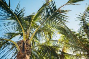 batch_Palm Tree