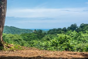 Large Jungle and Ocean View Lot – Playa Guiones Las Huacas