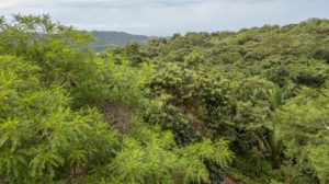 EE View Lot w Jungle and Ocean Views – Las Huacas