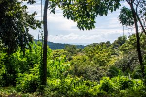 Elevated Jungle View Lot Next to Titled Parkland