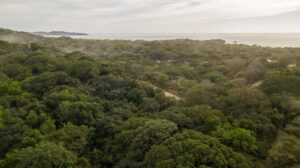 Large buildable lot,  Surrounded by NCA protected Jungle,  Priced to Sell