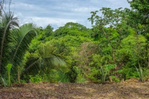 Amazing Mixed Use Property with Panoramic Jungle Views